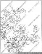 玫瑰花 白描底稿高清大图7下载