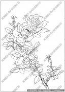 玫瑰 白描图片高清12下载