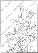 玫瑰 白描图片高清18下载