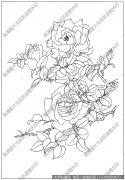 玫瑰花 白描底稿高清大图19下载