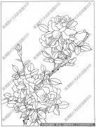 玫瑰 白描底稿高清大图23下载