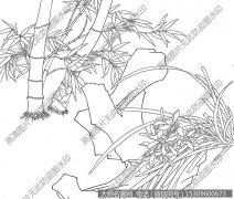 竹子 线描图片高清大图40下载